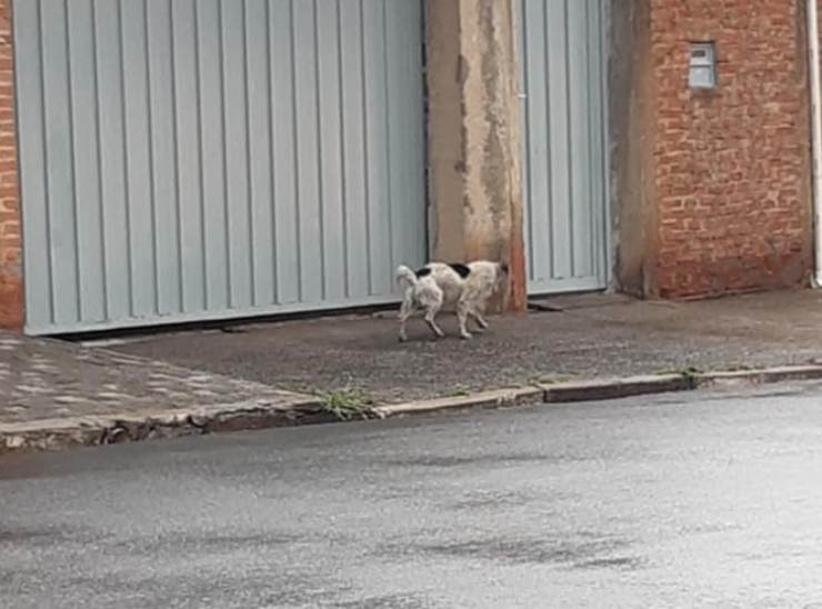 cane abbandonato salvato vicina