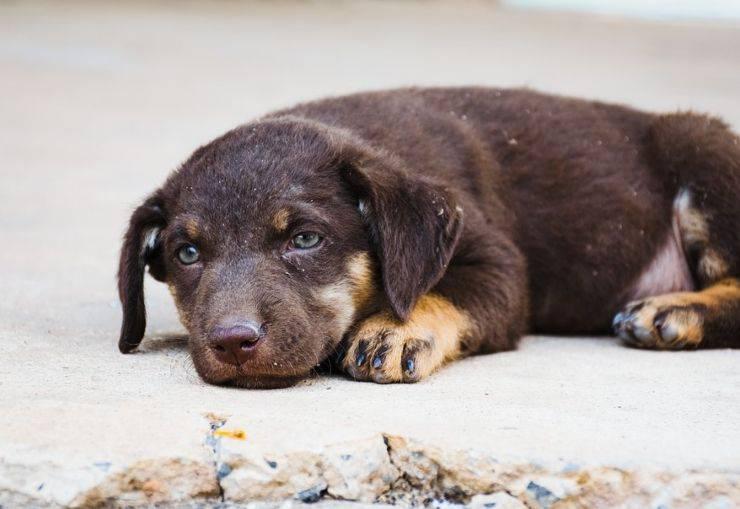 cane adottato poliziotto salvato