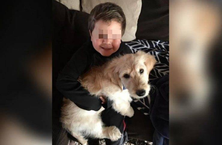 bambino tumore aiuta animali abbandonati