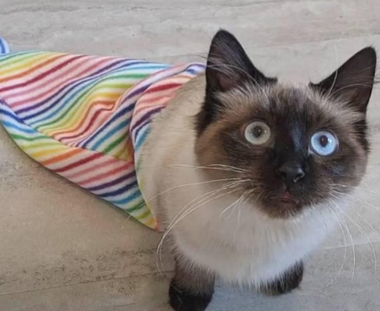 gattino paralisi zampe cerca famiglia