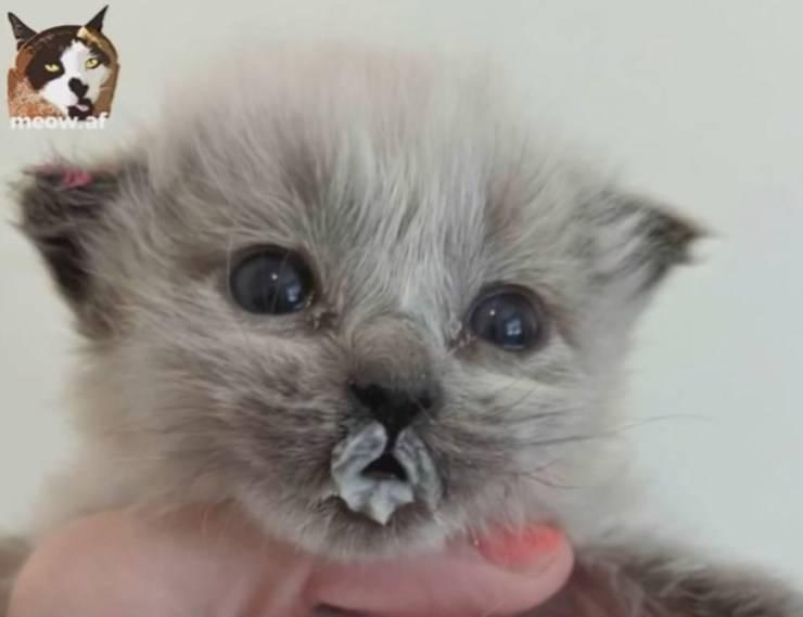 Gattina paralisi zampe cerca famiglia