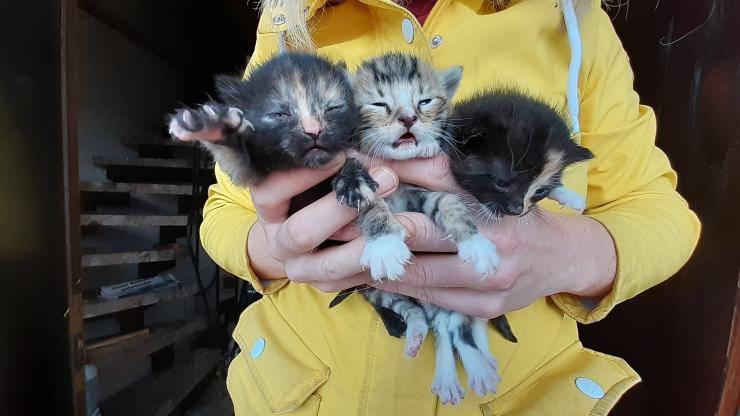 tre gattini trovati fienile