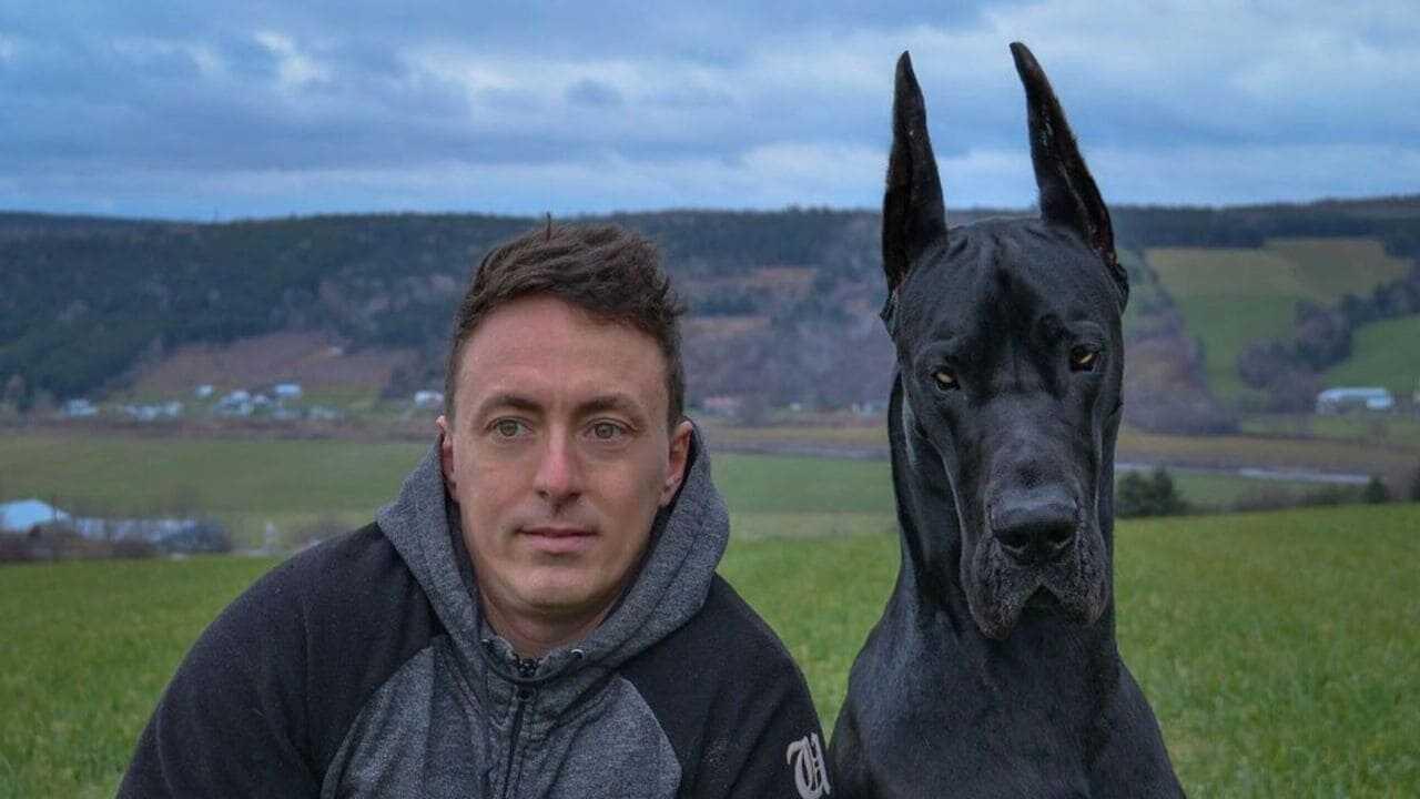 Enzo l'Alano, ecco il cane che somiglia a Batman