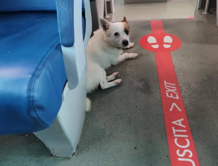 cane rifugia treno botti capodanno