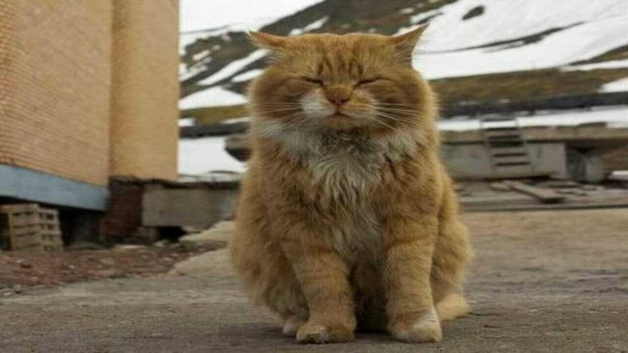 Kesha, l'unico gatto di un arcipelago norvegese