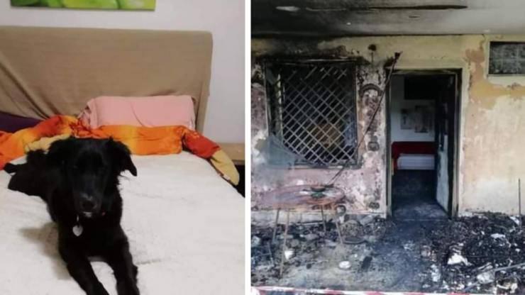 cane scappa casa incendiata petardi