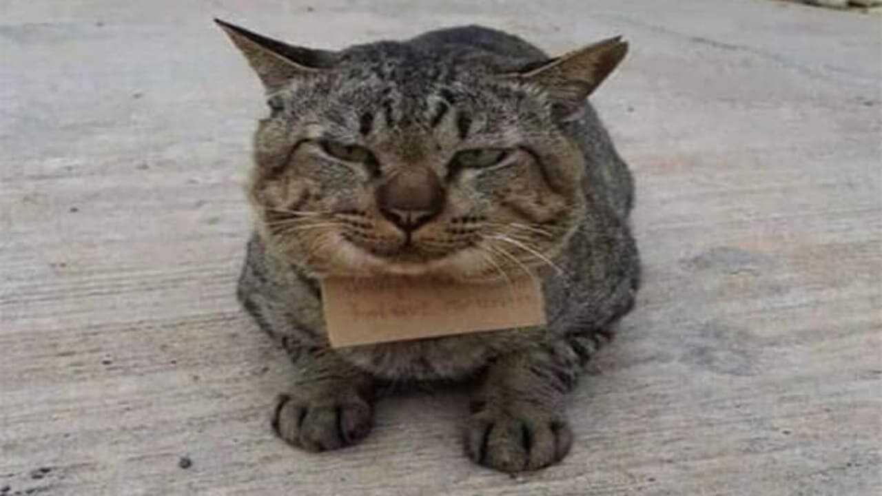 Gatto smarrito torna a casa con il conto della pescheria