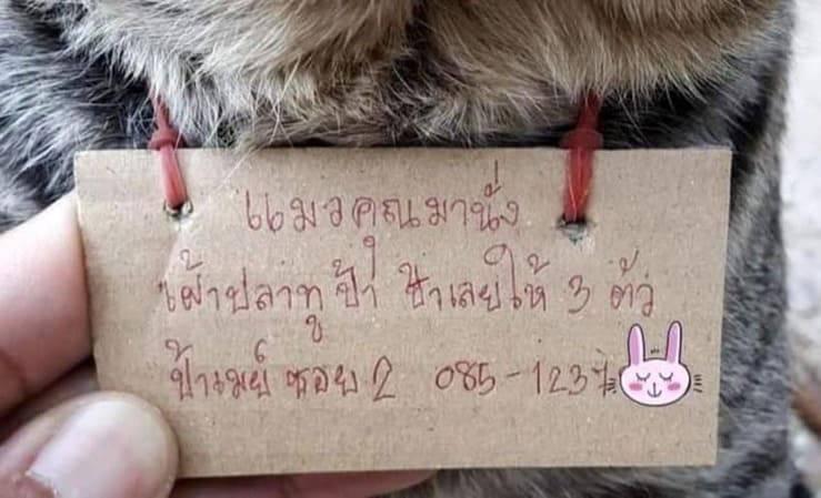 Gatto smarrito torna a casa con il conto della pescheria: l'esilarante foto del felino