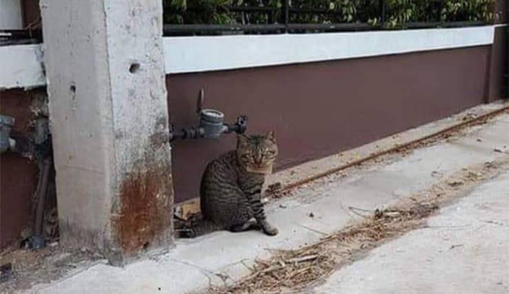 """""""Per favore, un altro sgombro""""; così ci immaginiamo la scena del gatto che in pescheria ordina il proprio piatto preferito, facendosi capire più che bene con il suo accento felino."""