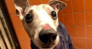 cane portato rifugio morte proprietario