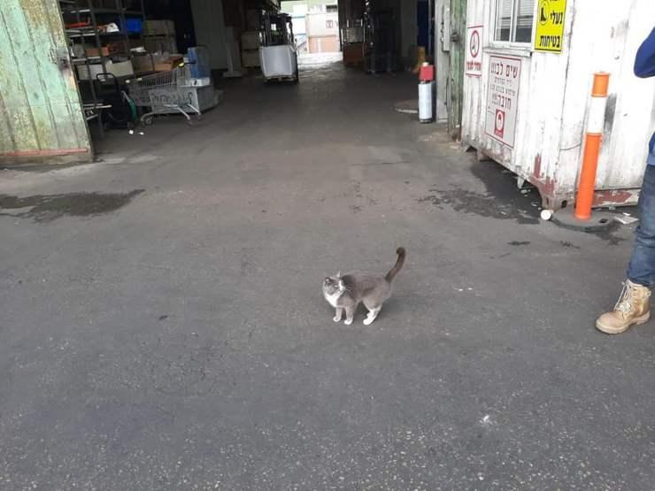 gatto container tre settimane