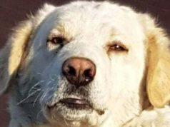 La storia di Carmelina: da randagio a cane di quartiere