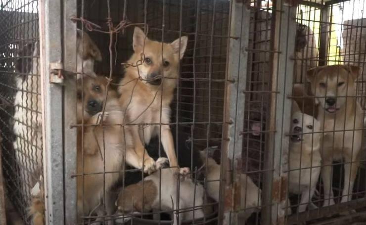 170 cani allevamento orrori