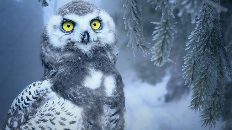 animali neve gufo