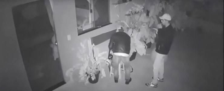 cane chiede coccole ladri furto