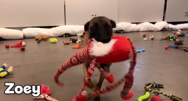 cani rifugio scelgono regalo natale