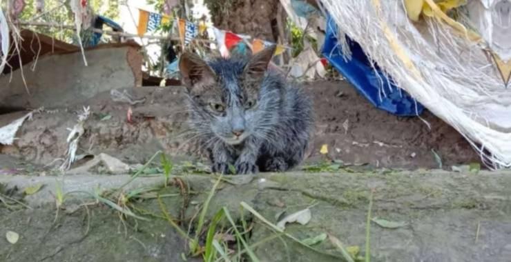 gatto grigio era solo sporco