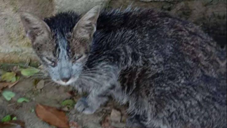 ragazza trova gatto randagio grigio