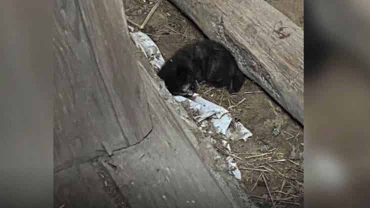 bambini trovano tre gattini fienile