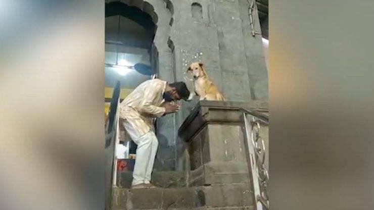 cane benedice fedeli zampa
