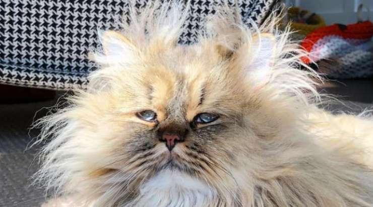 Primo piano del gatto (Foto Instagram)