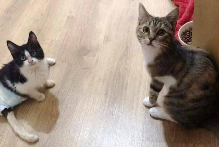 gattino tre zampe adotta micio paralizzato