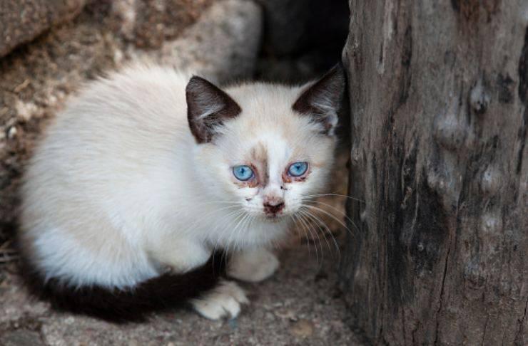 gattino cinque anni scomparso