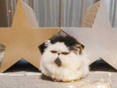 Il gatto Zuu