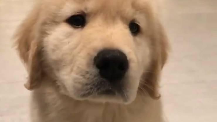 Cucciolo in primo piano (Foto video)