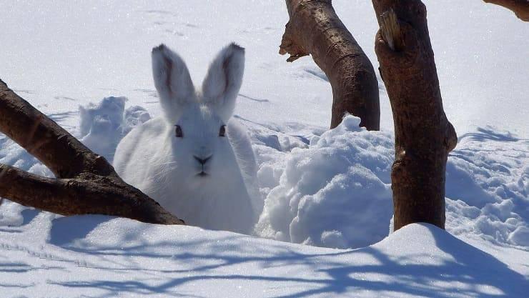 animali sulla neve
