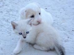 900 cuccioli salvati pandemia associazione