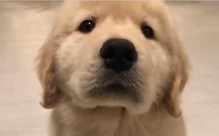 Cucciolo in posa (foto video)