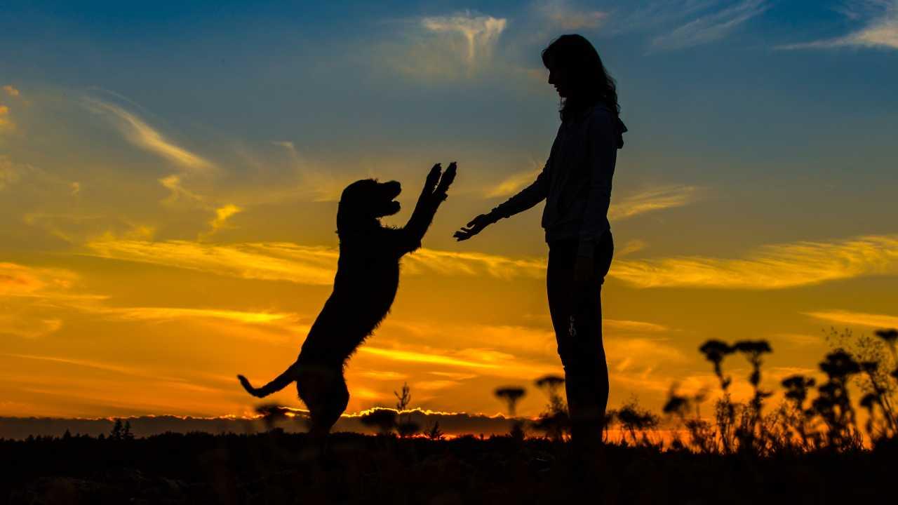 Dov'è nata l'amicizia tra cane ed essere umano?