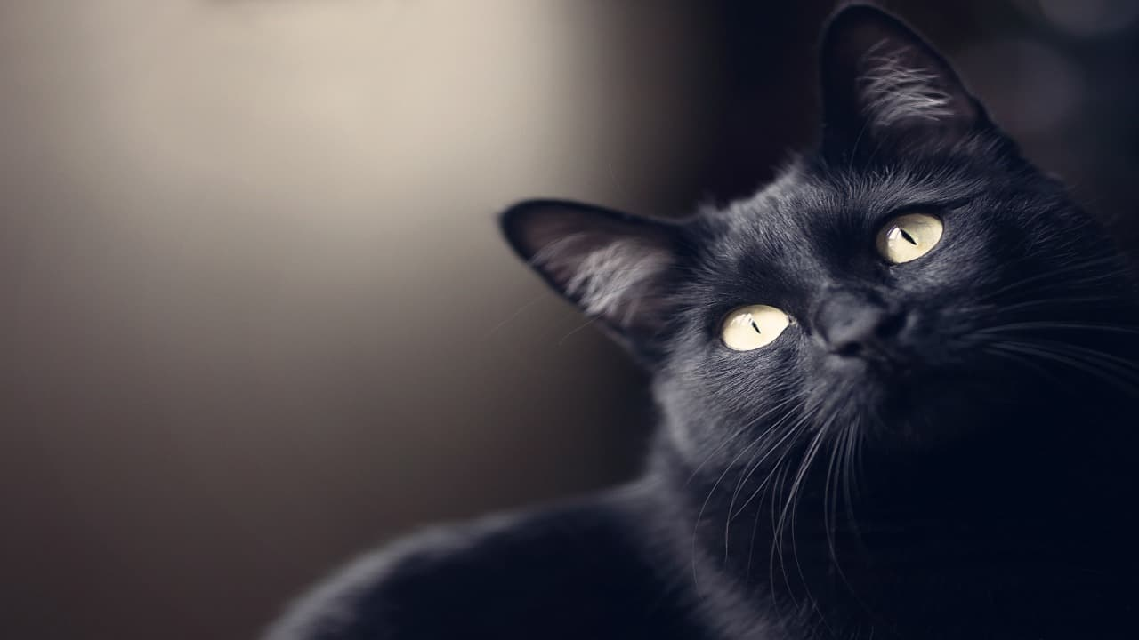 Gatto nero porta fortuna