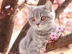 Come abituare il gatto a stare all'aperto