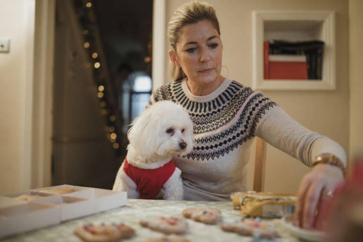 Il cane ha mangiato troppo a Natale