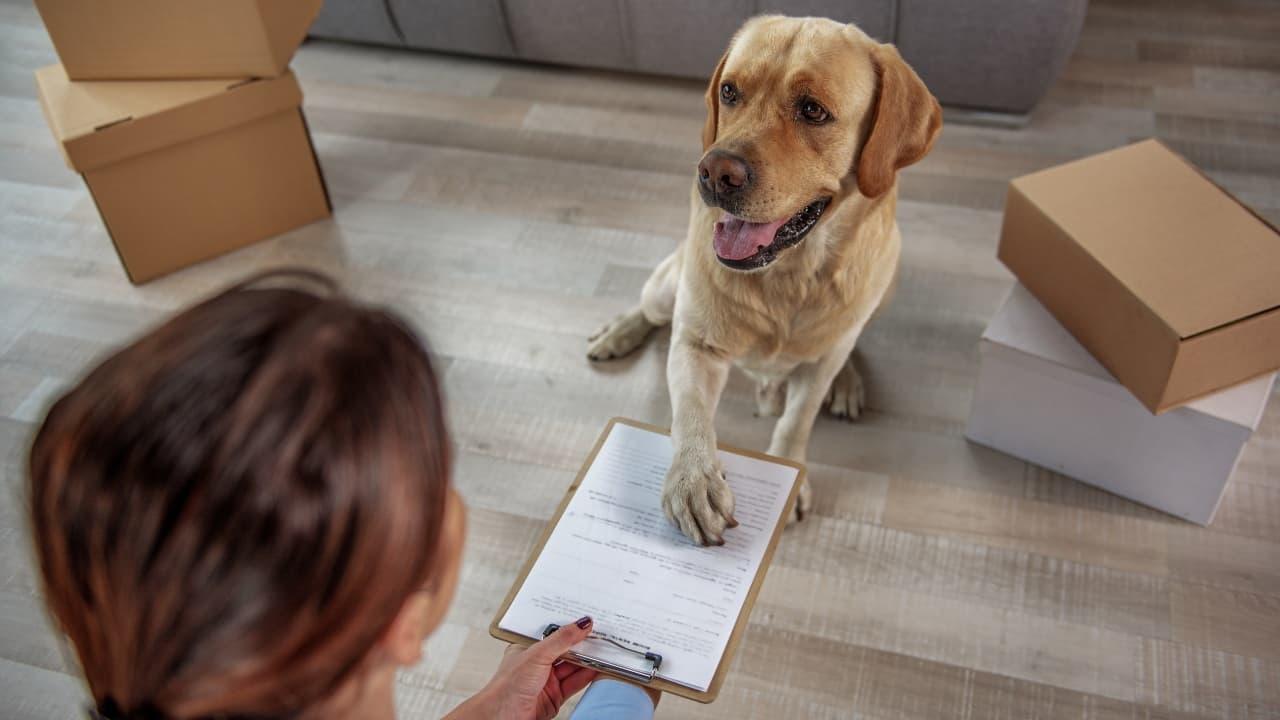 I documenti del cane