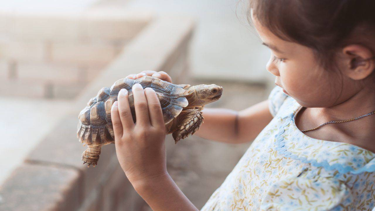 Il bambino si prende cura della tartaruga