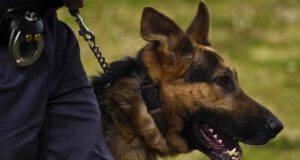 Cani anti-Covid all'aeroporto di Cuneo
