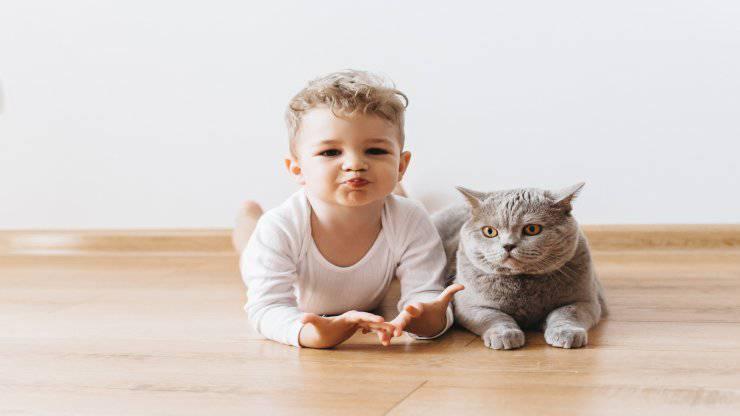 Razze di gatti per la Pet Therapy