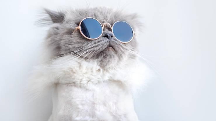 gatto occhiali gatti imitano comportamenti umani