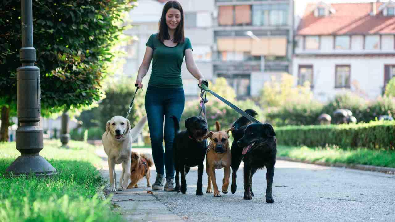 Dog sitter, verso l'istituzione di un albo professionale