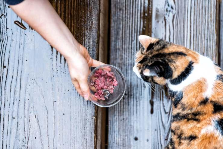 Proteine per gatti