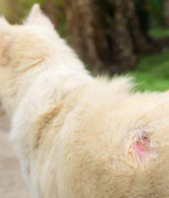 Alimentazione del cane con dermatite