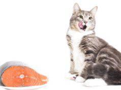 Il gatto può mangiare il salmone?