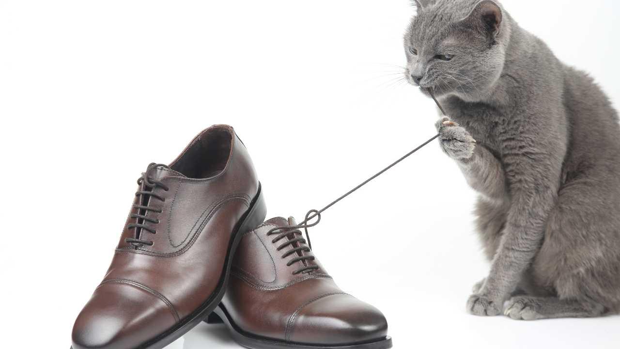 Il gatto ruba gli oggetti del vicino