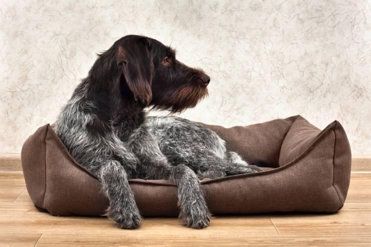 Cuccia da interno per il cane: bordi rialzati