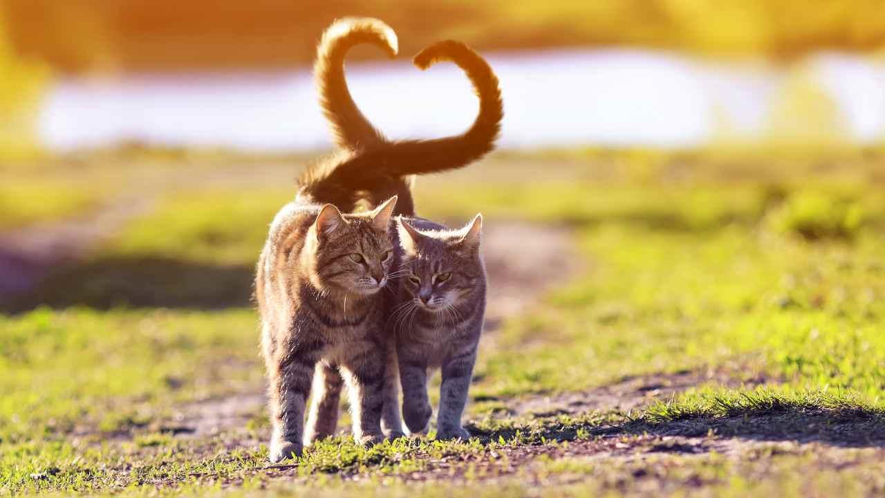 Gattili e oasi feline a confronto