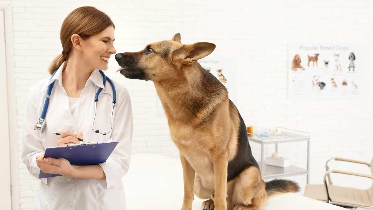 Il libretto sanitario del cane