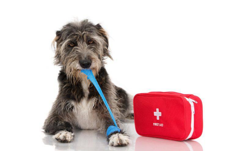 Acqua ossigenata per il cane